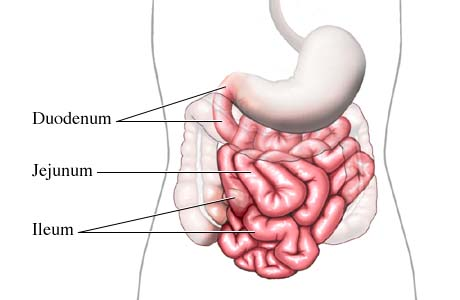 The Small Intestine Digestive System Life Is A Gift If You Have